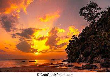 hermoso, tropical, ocaso