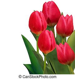hermoso, tulipanes, eps, tarjeta, 8, template., rojo