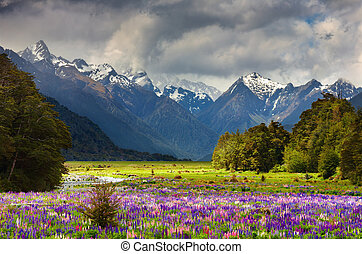 hermoso, valle
