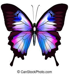 Hermoso vector aislado de mariposa azul