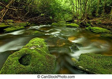 Hermoso y lujoso arroyo de bosques tropicales