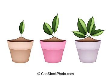Hermosos árboles verdes en macetas de flores de cerámica