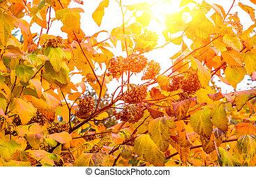 Hermosos arbustos de otoño