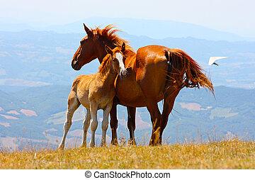 Hermosos caballos rojos en las montañas