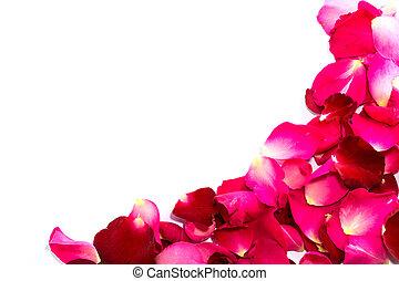 Hermosos pétalos de rosas rojas