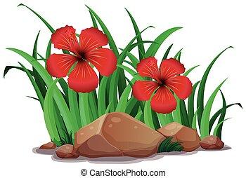 Hibicus rojo en el arbusto