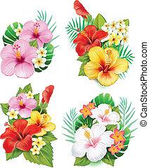 hibisco, flores, arreglo