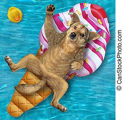 hielo, perro, crema, acostado, inflable