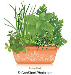 hierba, arcilla, jardín, maceta, italiano