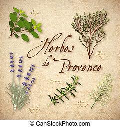 hierba, de, herbes, mezcla, provence