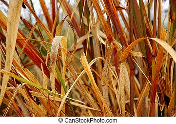 Hierba de pantano