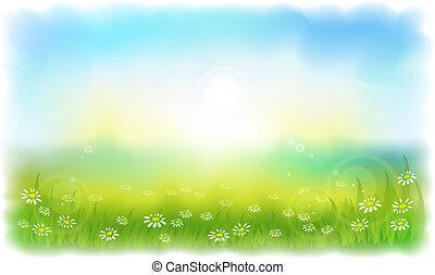 Hierba dorada con margaritas. Día de verano soleado al aire libre.