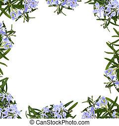 hierba, flor, frontera, romero