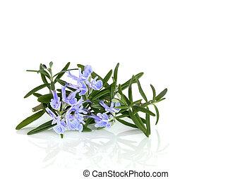 hierba, flor, romero
