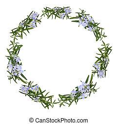 hierba, flor, romero, guirnalda