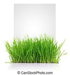 Hierba fresca con espacio copiado aislado en el fondo blanco