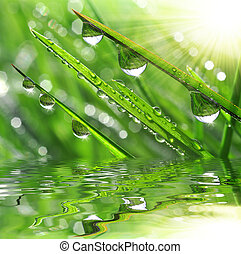 Hierba fresca con gotas de rocío