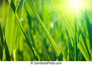 Hierba fresca de primavera