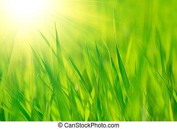 Hierba fresca verde primavera y sol cálido