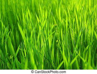 Hierba fresca verde primaveral. Edificio natural