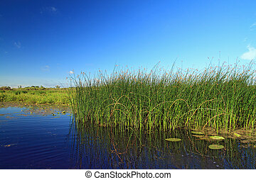 Hierba Marsh