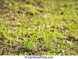 Hierba primavera