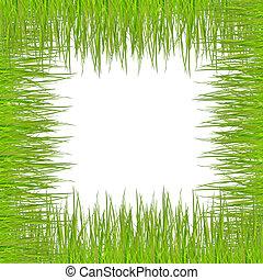 Hierba sobre fondo blanco