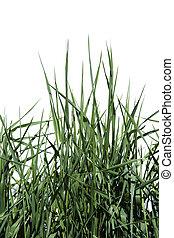 Hierba verde aislada de fondo blanco