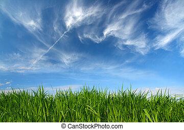 Hierba verde bajo el cielo con nubes desplumadas