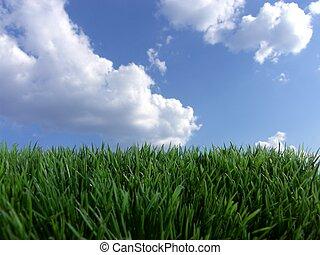 Hierba verde cielo azul