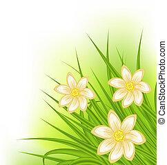 Hierba verde con flores, fondo primaveral