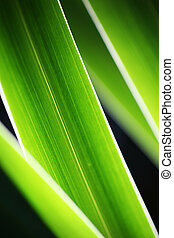 Hierba verde de fondo abstracto