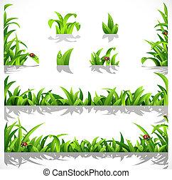 hierba verde, exuberante, rocío
