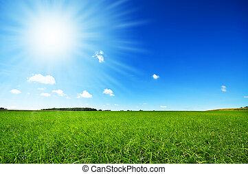 Hierba verde fresca con cielo azul brillante