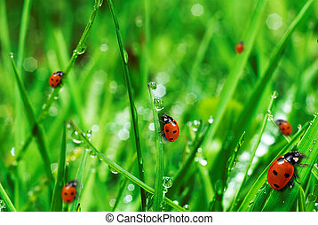 Hierba verde fresca con gotas de agua