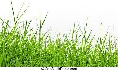 Hierba verde sobre fondo blanco