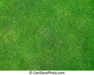 Hierba verde verde