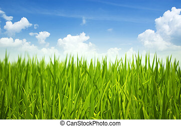 Hierba verde y cielo