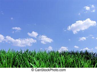 Hierba verde y cielo azul