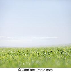 Hierba verde y cielo claro como fondo natural
