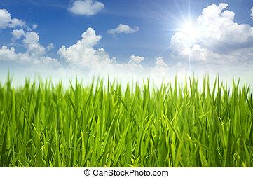 Hierba verde y cielo.