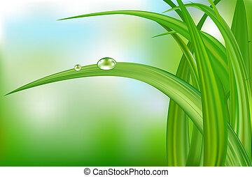 Hierba verde y gotas de agua.
