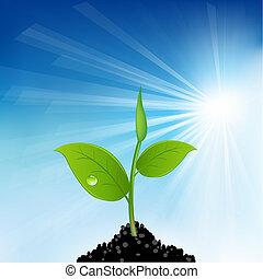 Hierba verde y planta joven