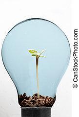 Hierba y planta dentro de la bombilla