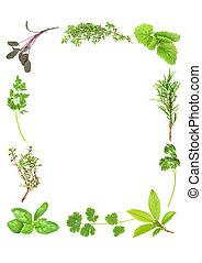 hierbas, aromático, fresco