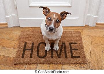 hogar, bienvenida, perro