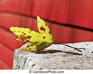 Hoja de otoño, puente cubierto rojo