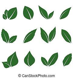 hoja, imagen, vector, verde