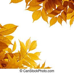 hoja marrón, naranja, hojas, otoño, fondo., colores, amarillo, blanco, frontera, encima