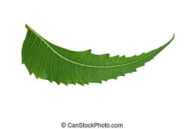 hoja, -, /, neem, indio, herbario, medicinal
